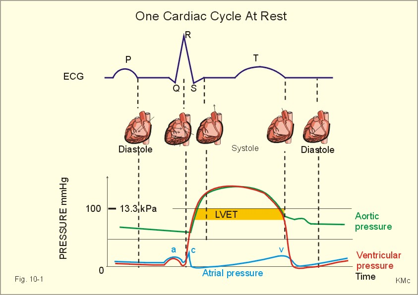 systolic event in cardiac cycle