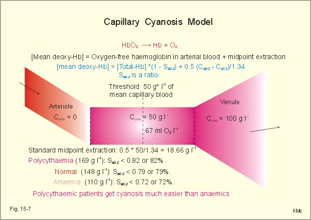 New Human Physiology Ch 15