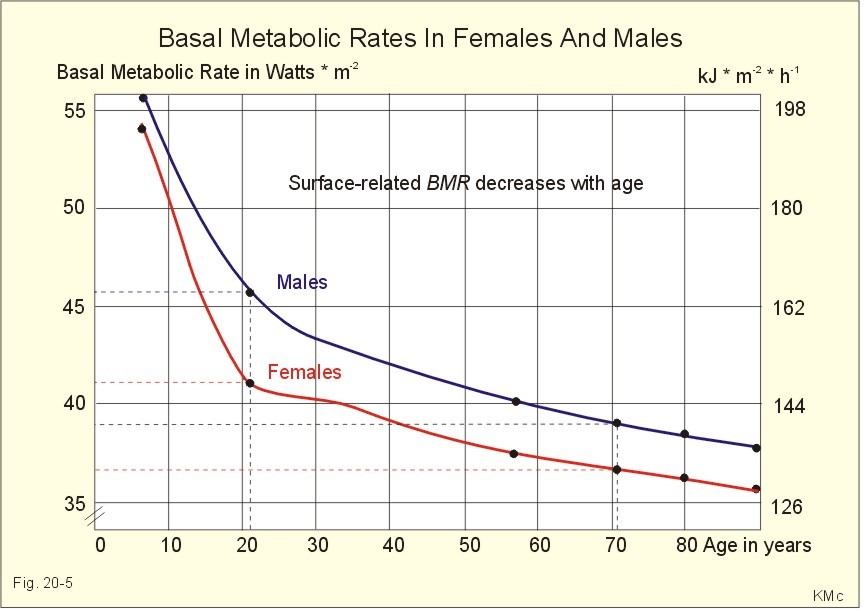 metabolic rate and body size relationship photography
