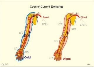 human arm